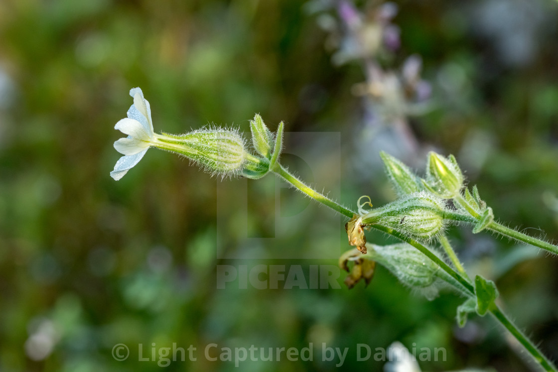 """Blooming white flower blurred green leaves"" stock image"
