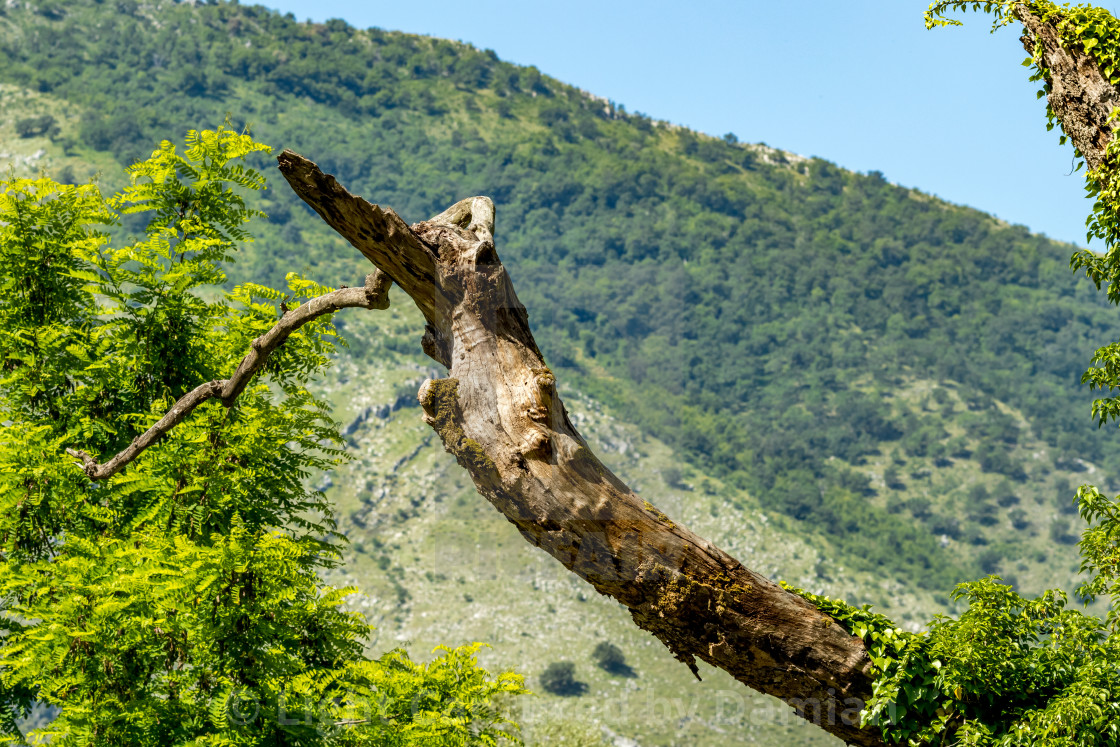 """""""Dry tree in a green spring forest with lush green"""" stock image"""