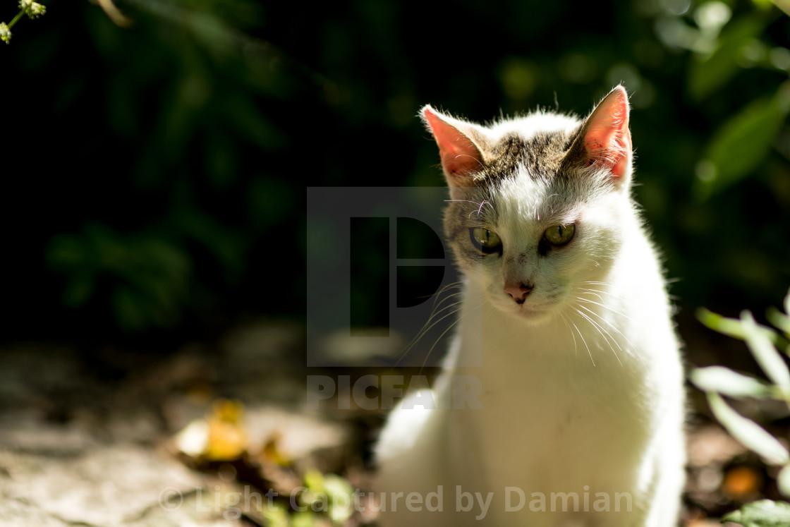 """White stray cat low key nature portrait"" stock image"