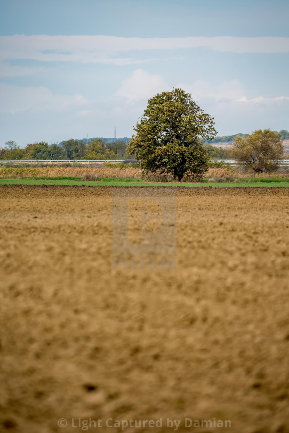 """Walnut tree dramatic sky, brown soil, plowed field"" stock image"