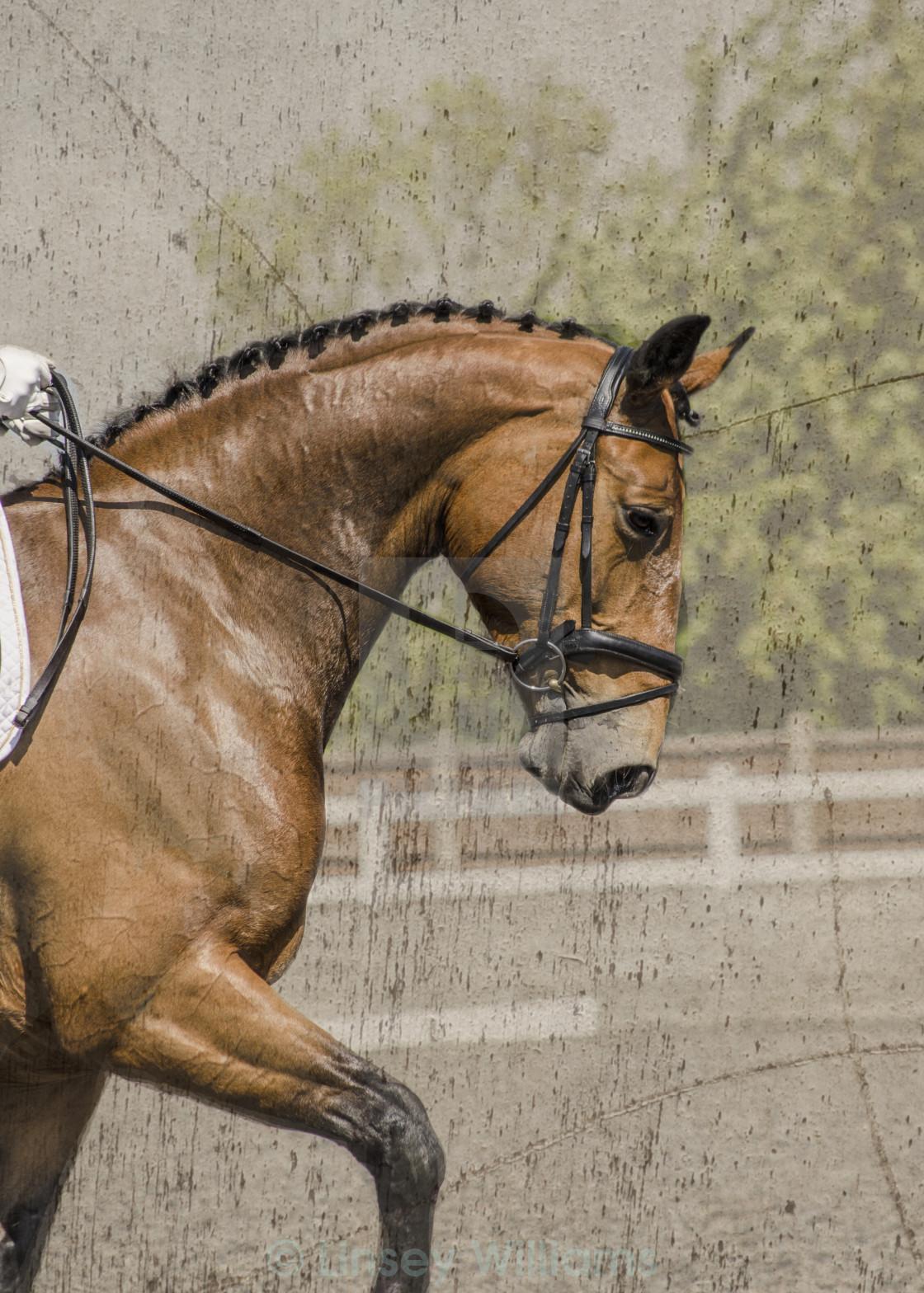 """Dressage Horse"" stock image"