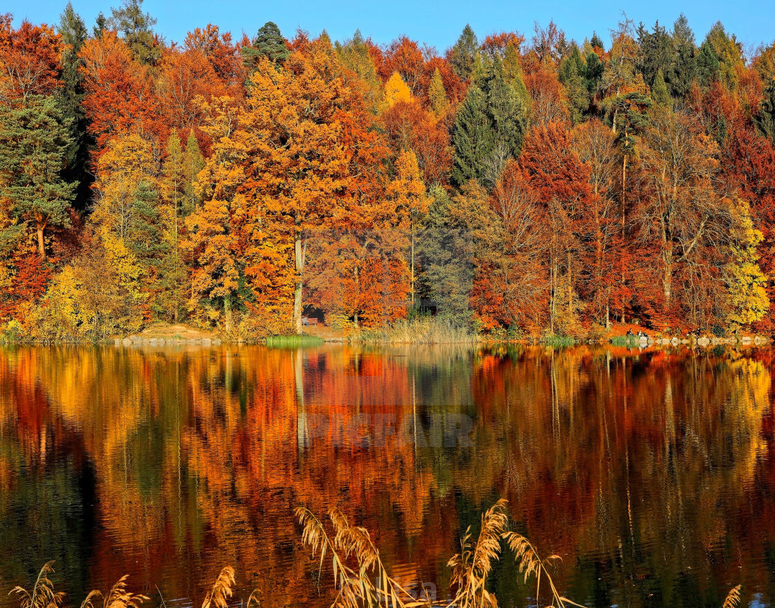 """""""Fall Expression"""" stock image"""