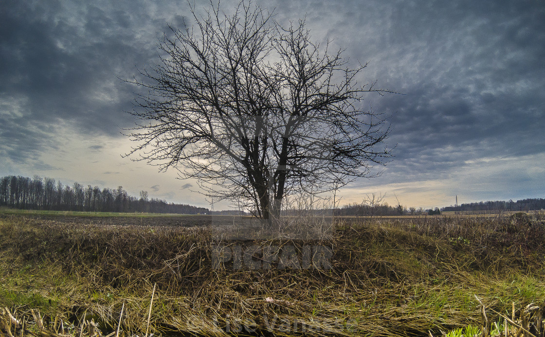 """""""Under a threatening sky, the tree stands."""" stock image"""