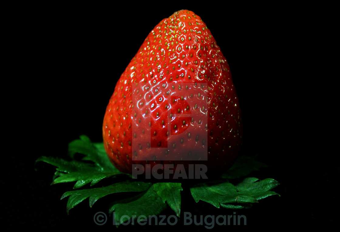 """""""A Simple Strawberry"""" stock image"""