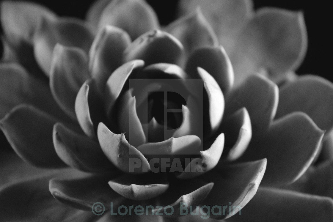 """A Plant In Black & White"" stock image"
