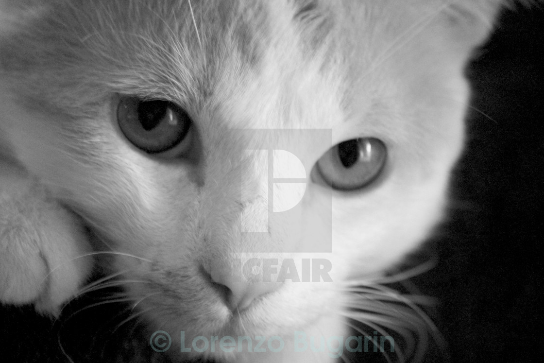 """Rory In Black & White"" stock image"