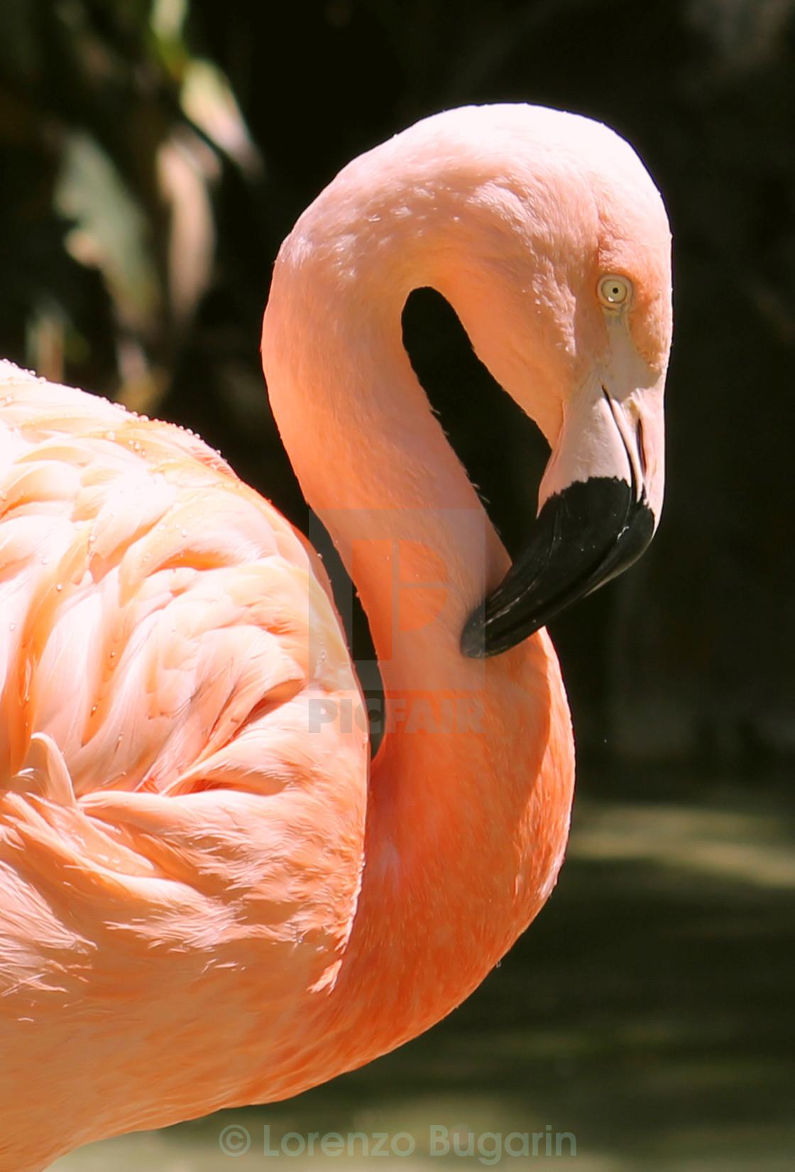 """Lovely Bird But It's Knees Bend Backward"" stock image"