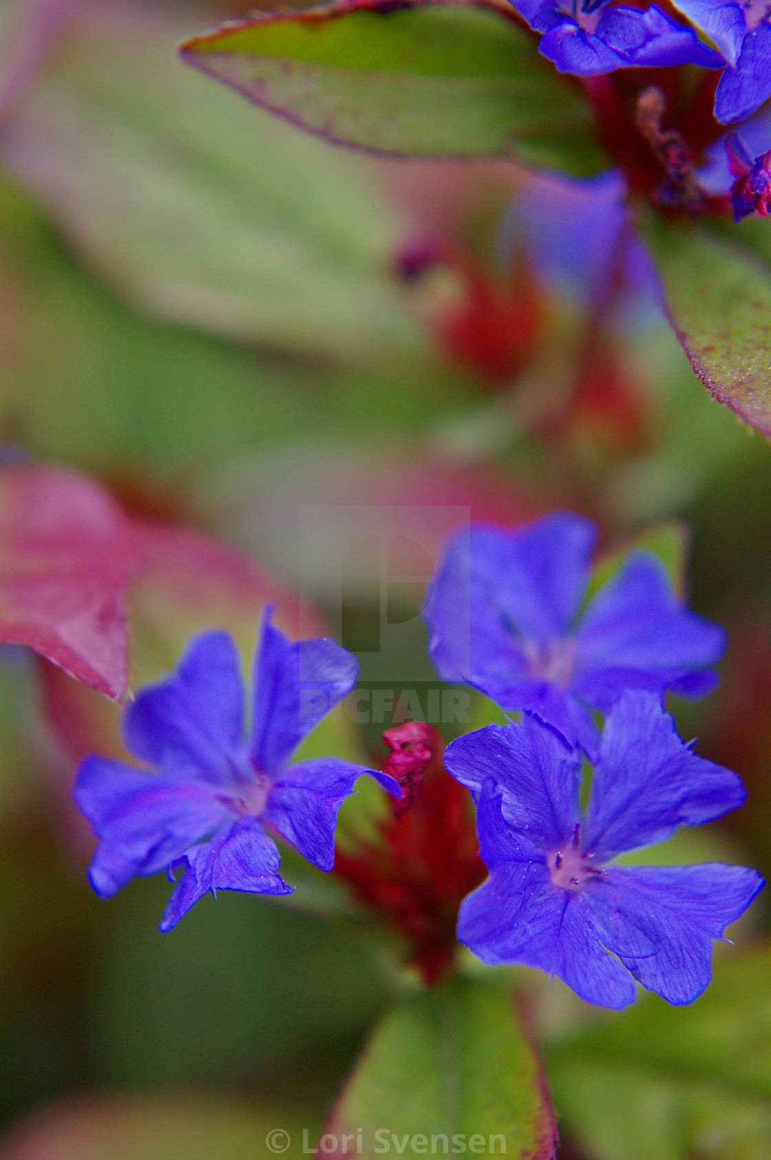 """Brilliant Blue Full"" stock image"