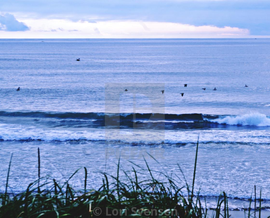 """Birds Over Waves - South Beach Washington"" stock image"