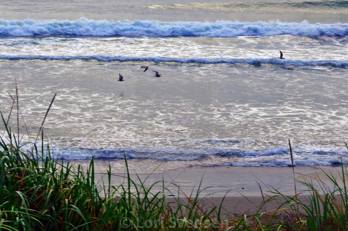 """Gulls Fly Along Surf - South Beach Washington"" stock image"