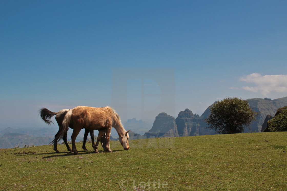 """Horses in Simien Mountains, Ethiopia"" stock image"