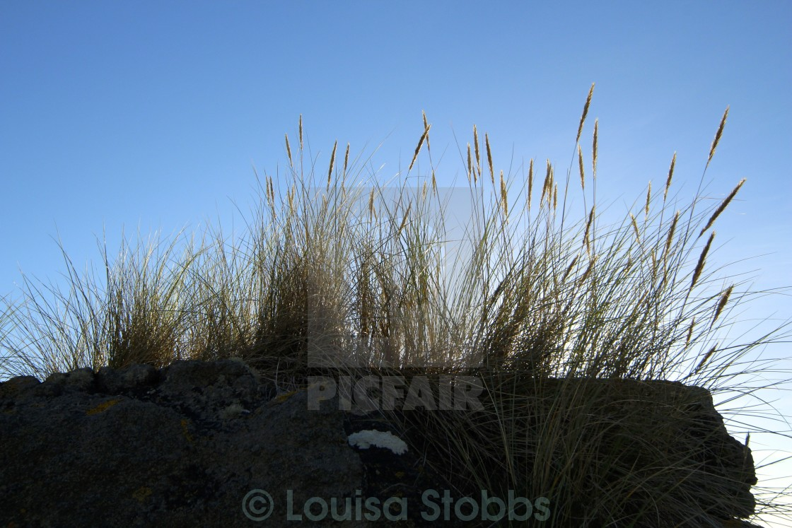 """Beach Dunes 2"" stock image"