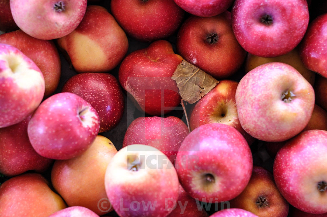 """apple"" stock image"