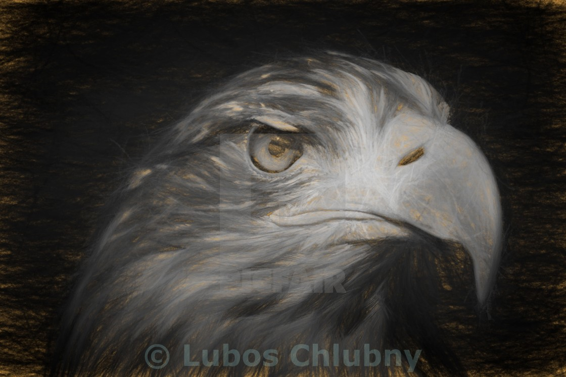 Pencil sketch with the image of a sea eagle stock image