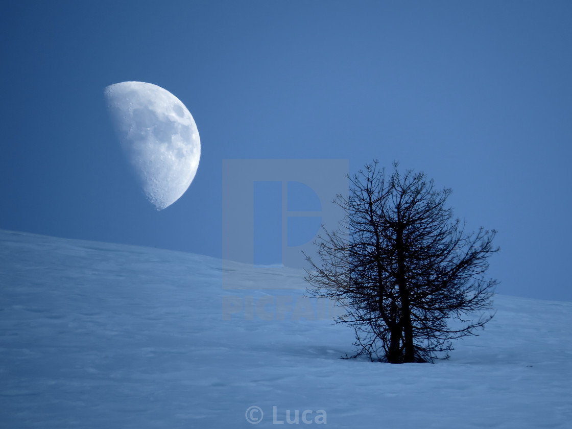 """Half moon rising behind a lonely tree"" stock image"