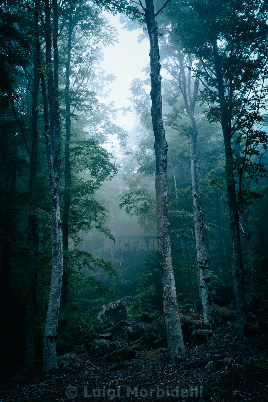 """""""Dark forest with fog"""" stock image"""