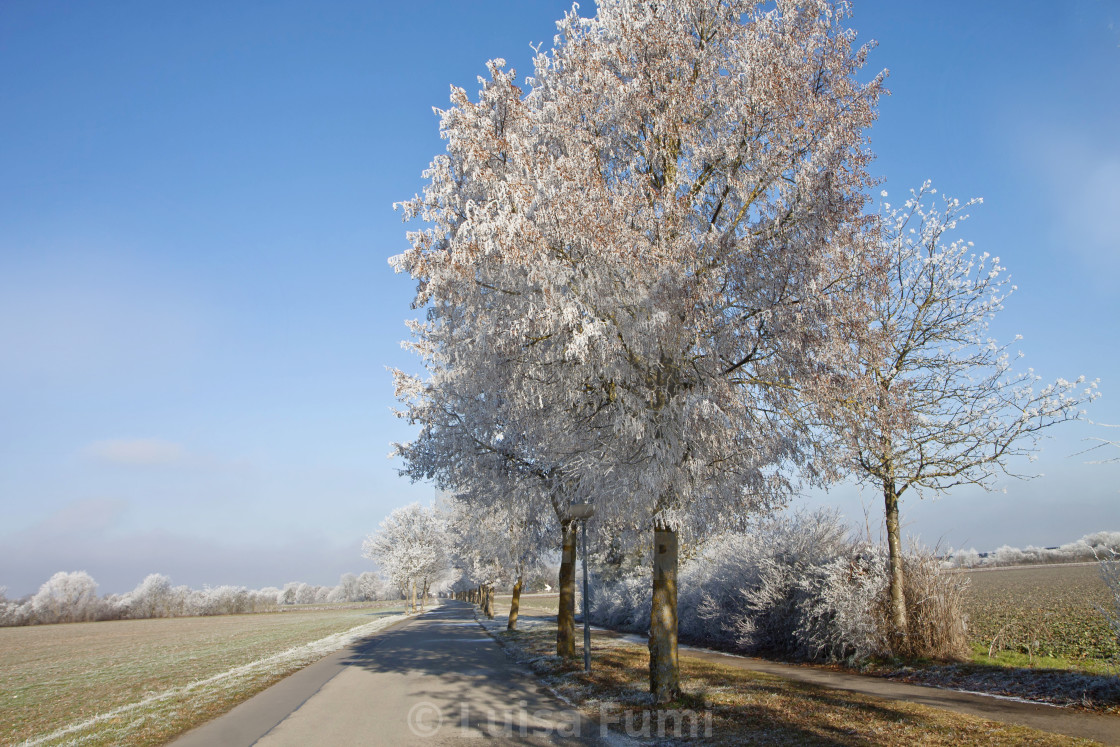 """Bavarian winter, rural road with frosted trees"" stock image"