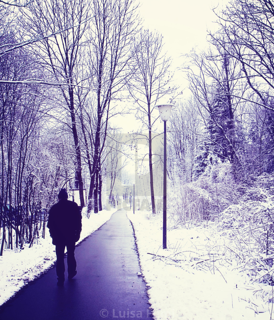 """Solitary walk in the wood with winter snow"" stock image"
