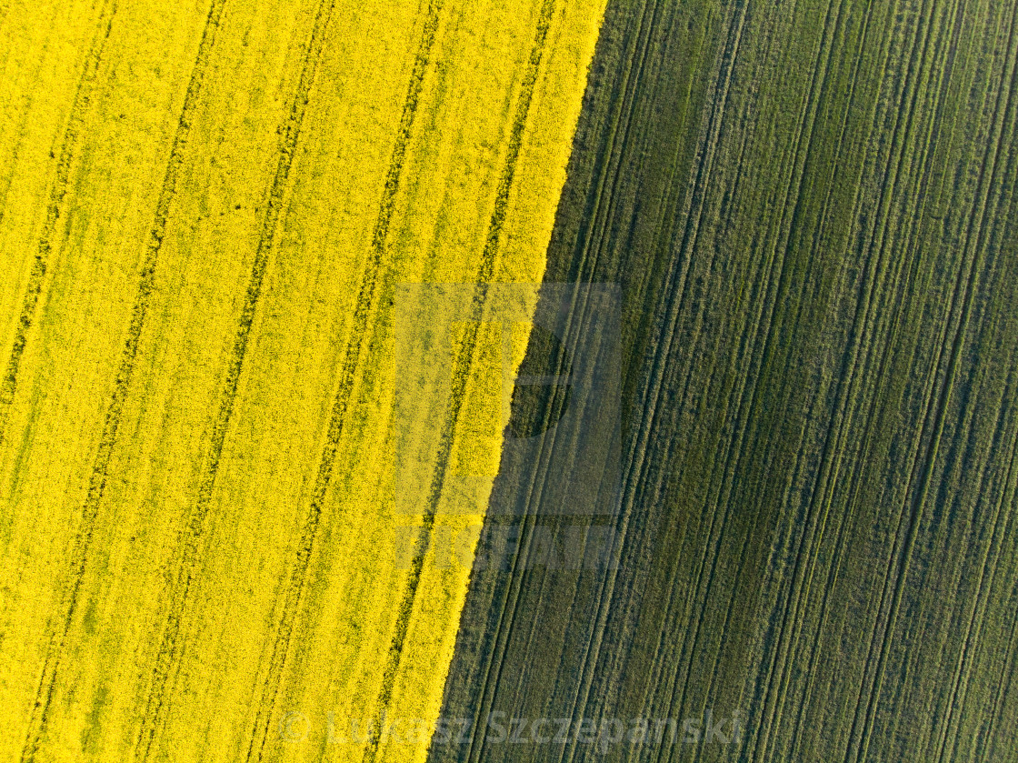 """""""To down aerial view of yellow canola and green grain fields"""" stock image"""