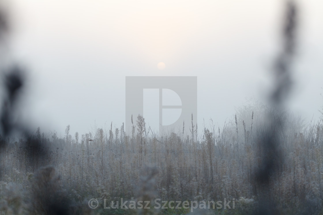 """""""Frozen meadow in the morning"""" stock image"""