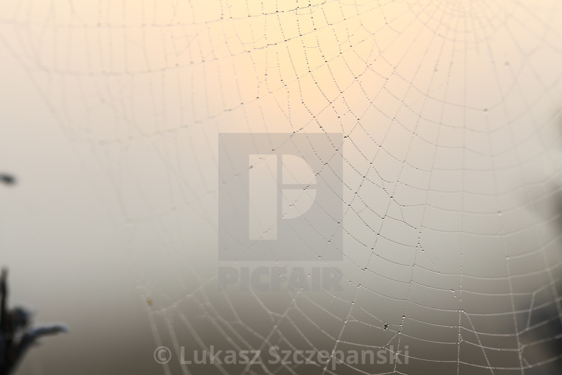 """""""Water drops on spider's web in the morning on frozen meadow"""" stock image"""