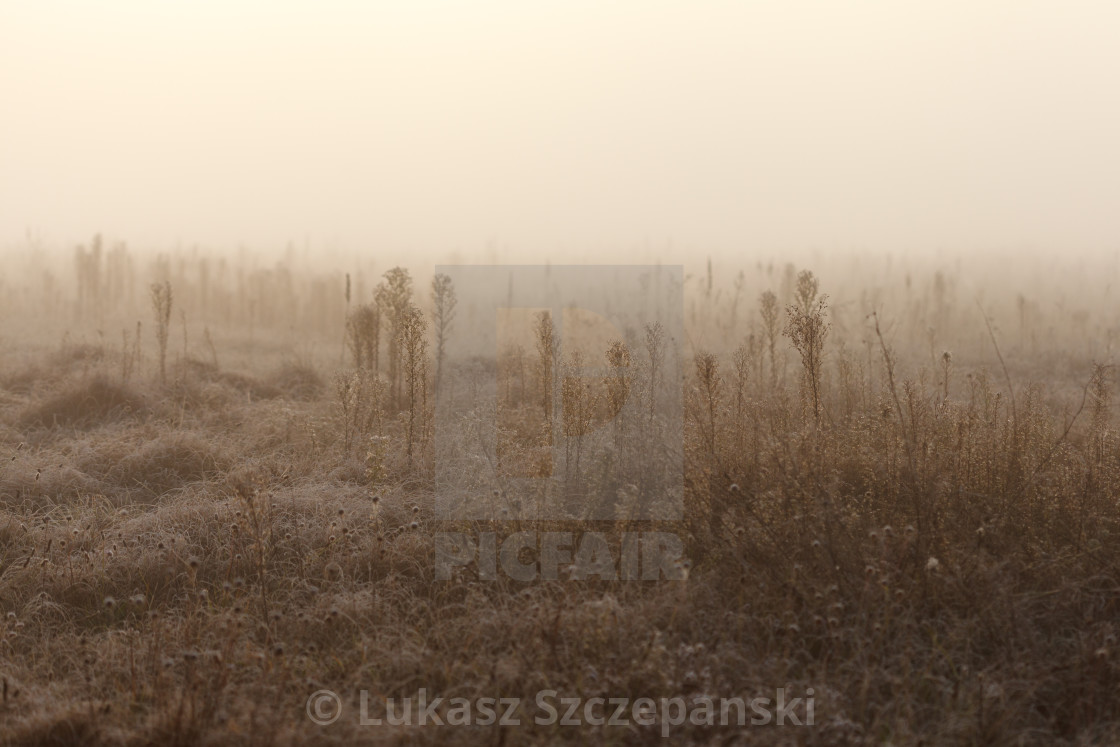 """Frozen meadow in the morning"" stock image"
