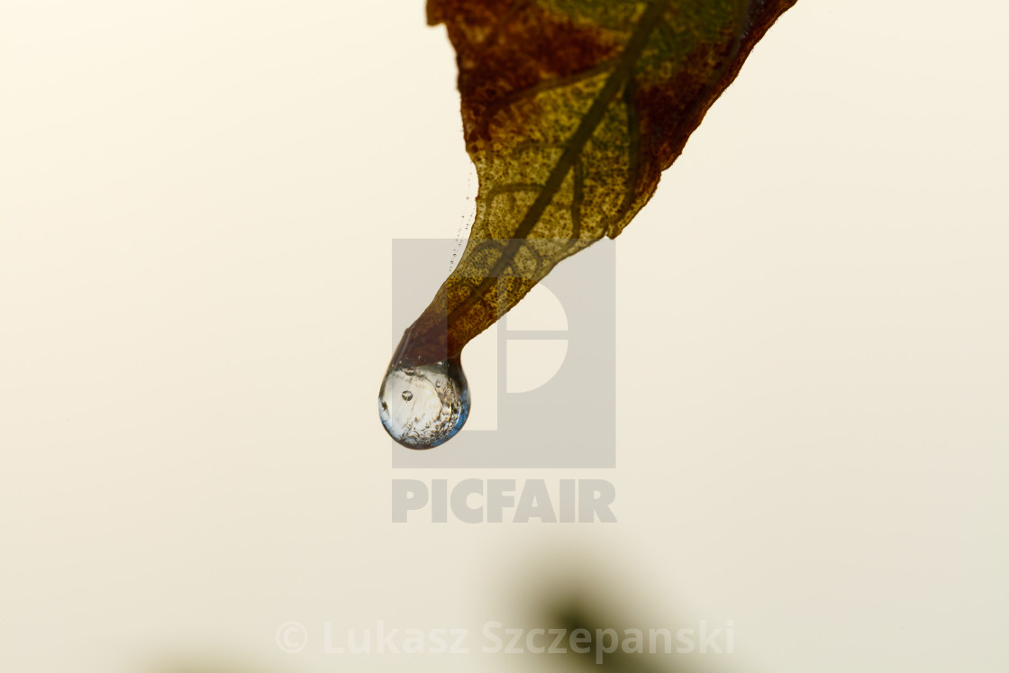 """""""Frozen water drop at the end of autumn leaf"""" stock image"""