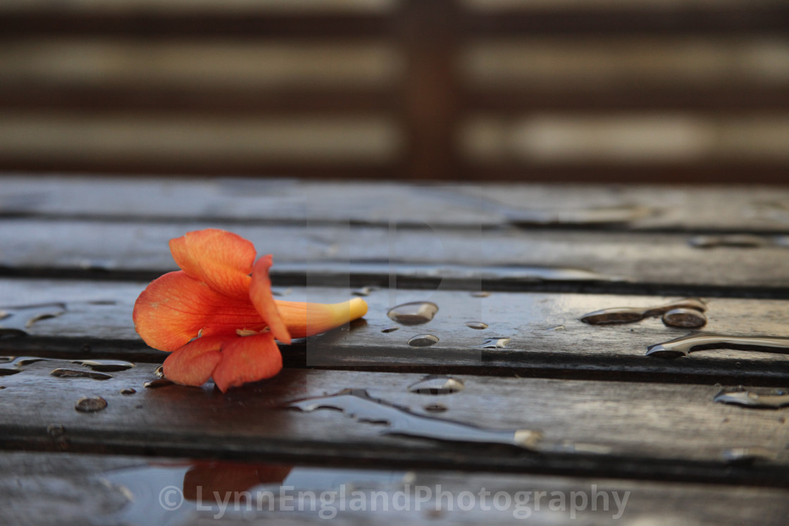 """""""After the Rain ....."""" stock image"""