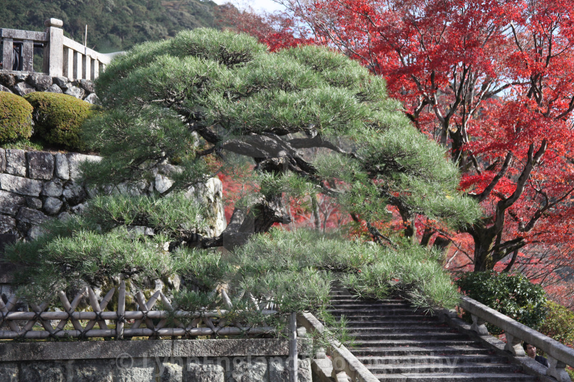 """""""Colours of Kyoto"""" stock image"""