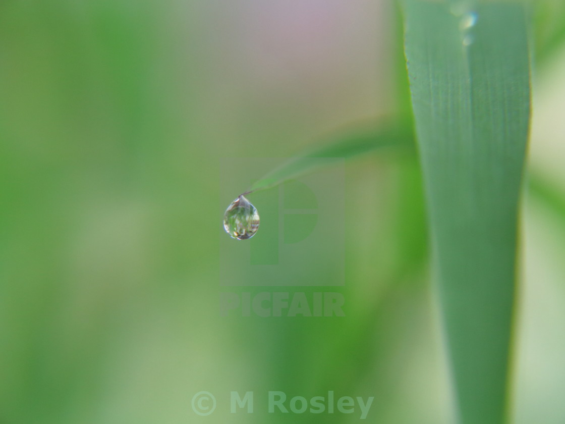 """Morning dew in the centre"" stock image"