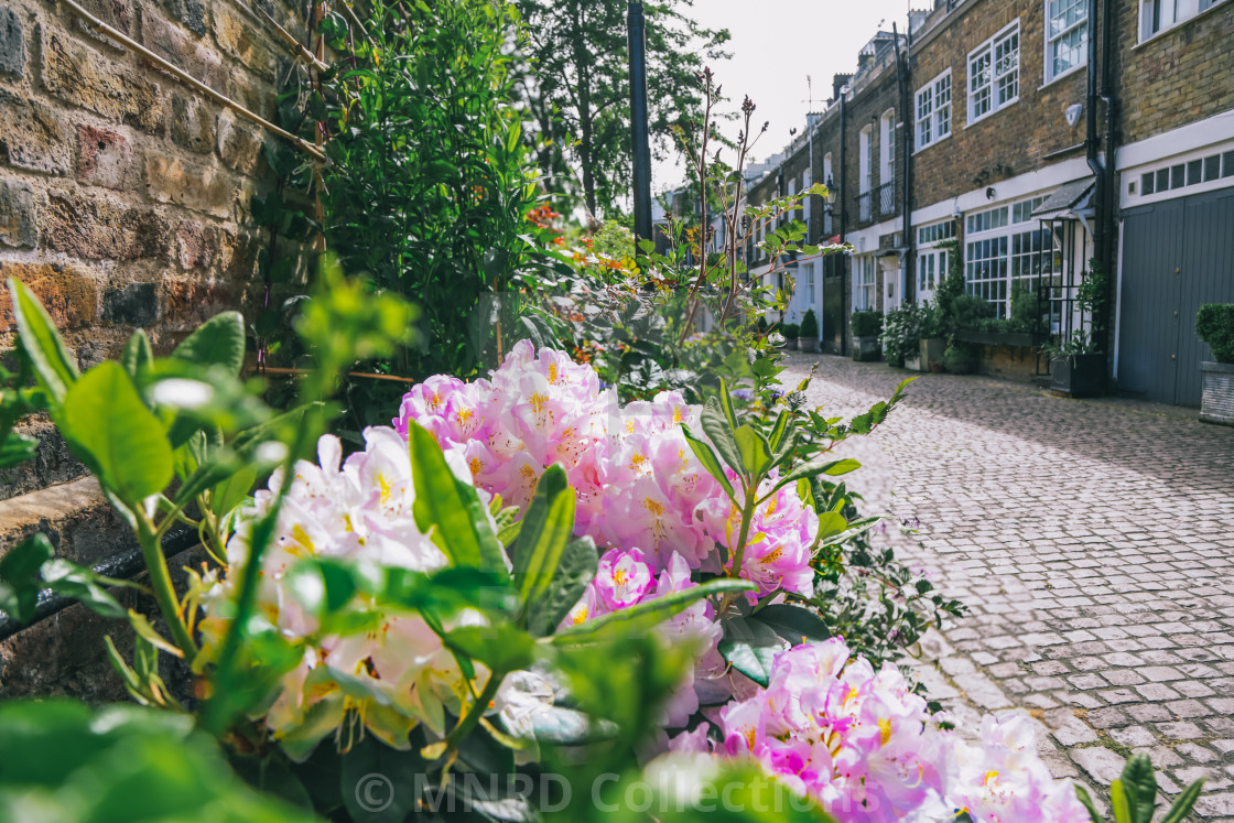 """Pretty In Pink on Kynance Mews"" stock image"