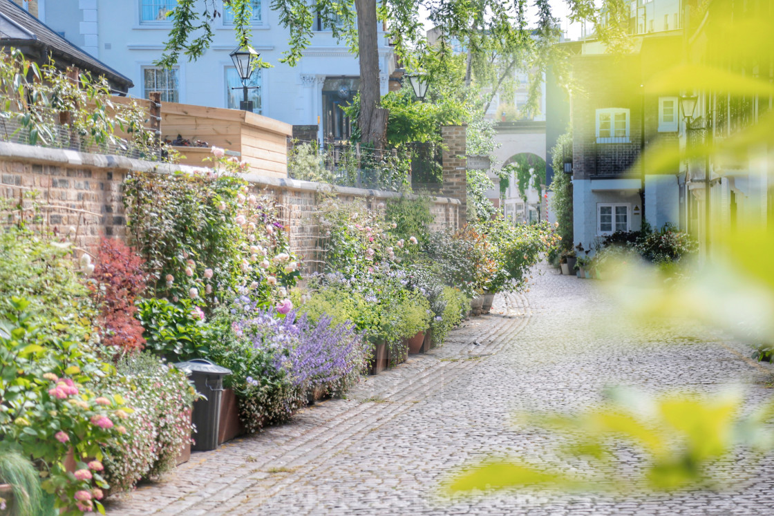 """Kynance Mews in Spring"" stock image"