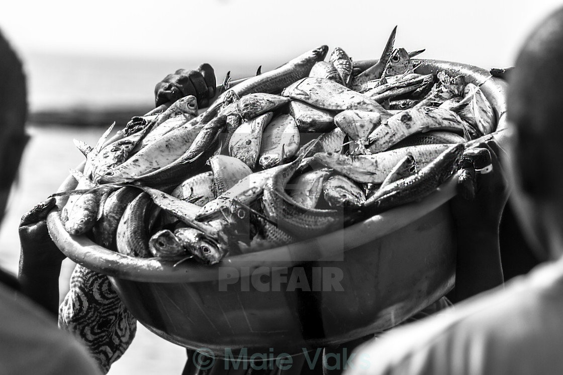 """Hands Holding Catch Of Fish"" stock image"