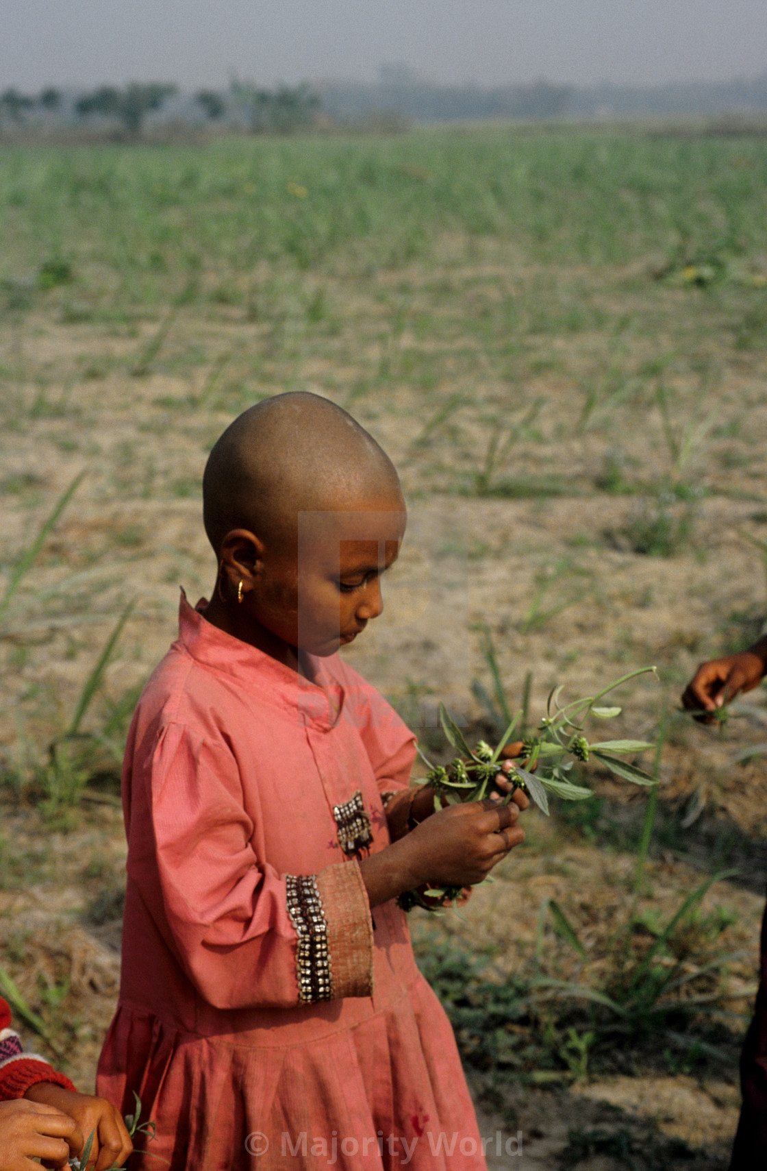 """""""A child with Dondu Calus - white flower at a Nayakrishi (new agriculture)..."""" stock image"""