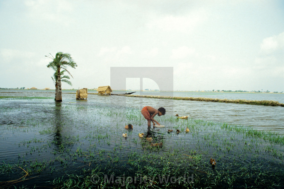 """""""A rural girl feeding ducks in the waters near a shrimp field locally known as..."""" stock image"""