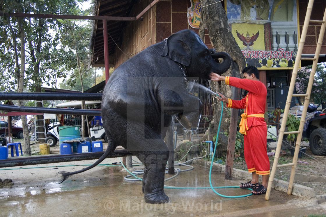 """""""Elephant being hosed down. Thailand. January 21, 2007."""" stock image"""
