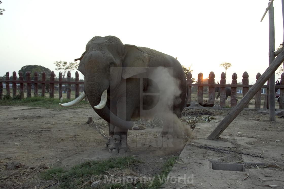 """Elephant at elephant reserve having a dust bath. Thailand. January 21, 2007."" stock image"