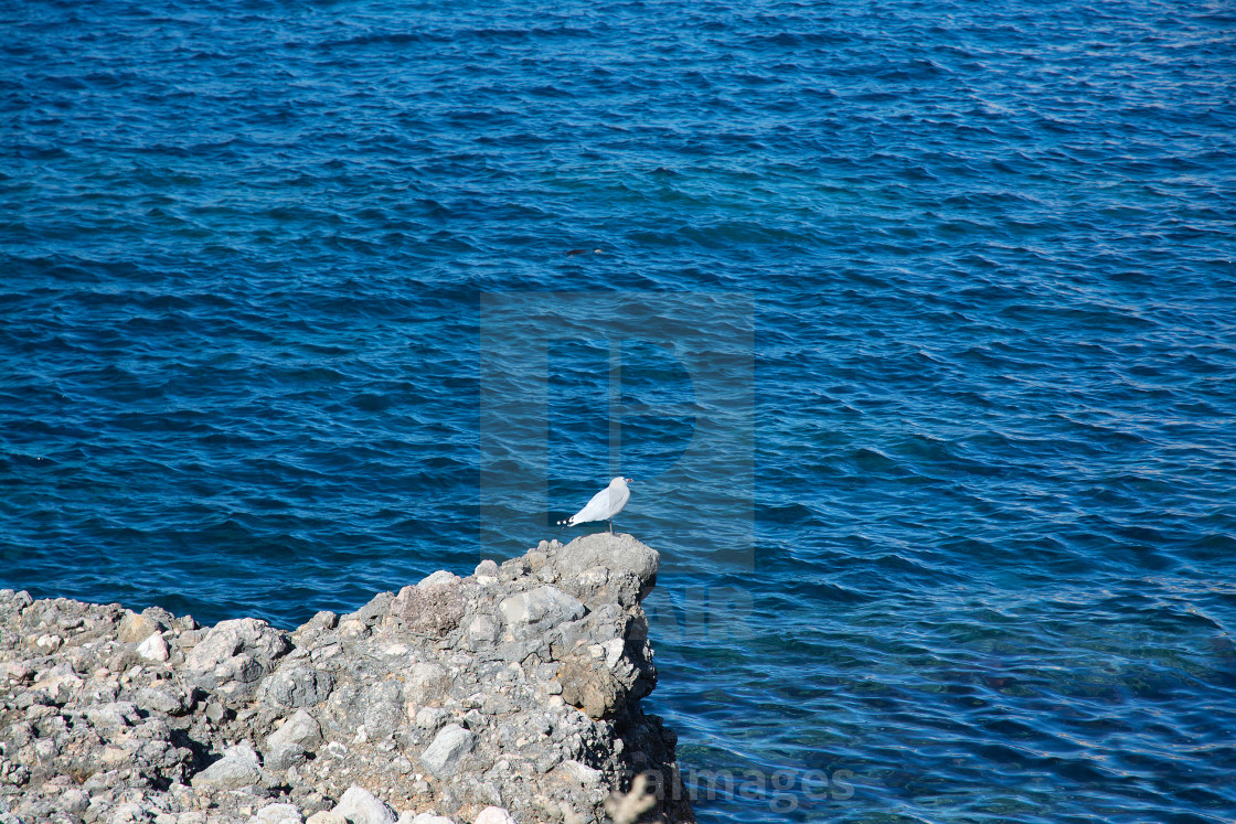 """""""Seagull on rock"""" stock image"""