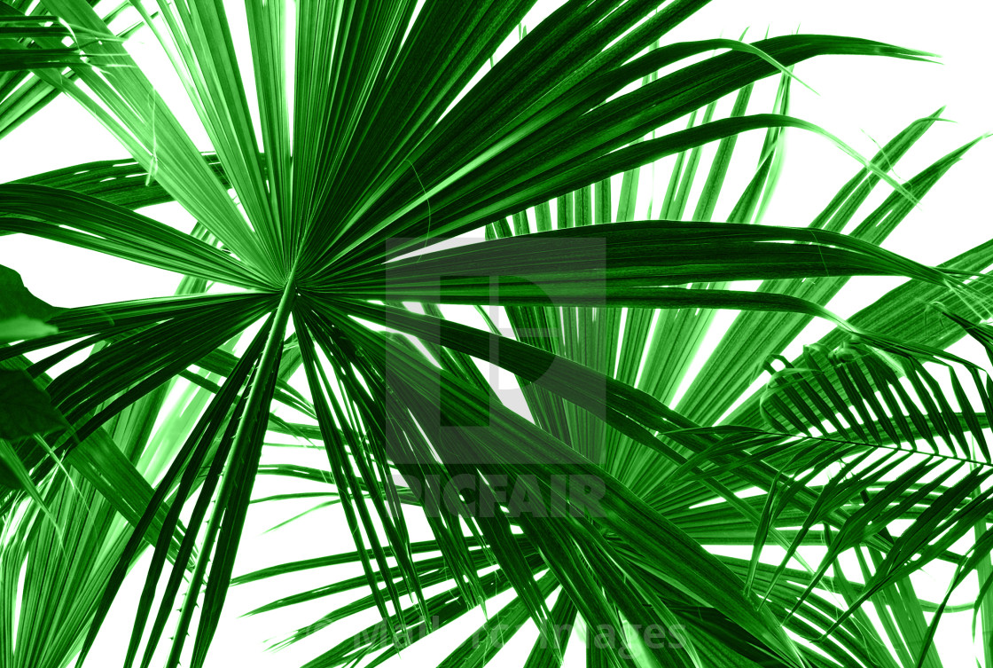 """Abstract green palm leaves"" stock image"