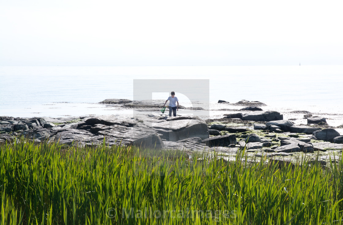 """Boy crabfishing with net"" stock image"