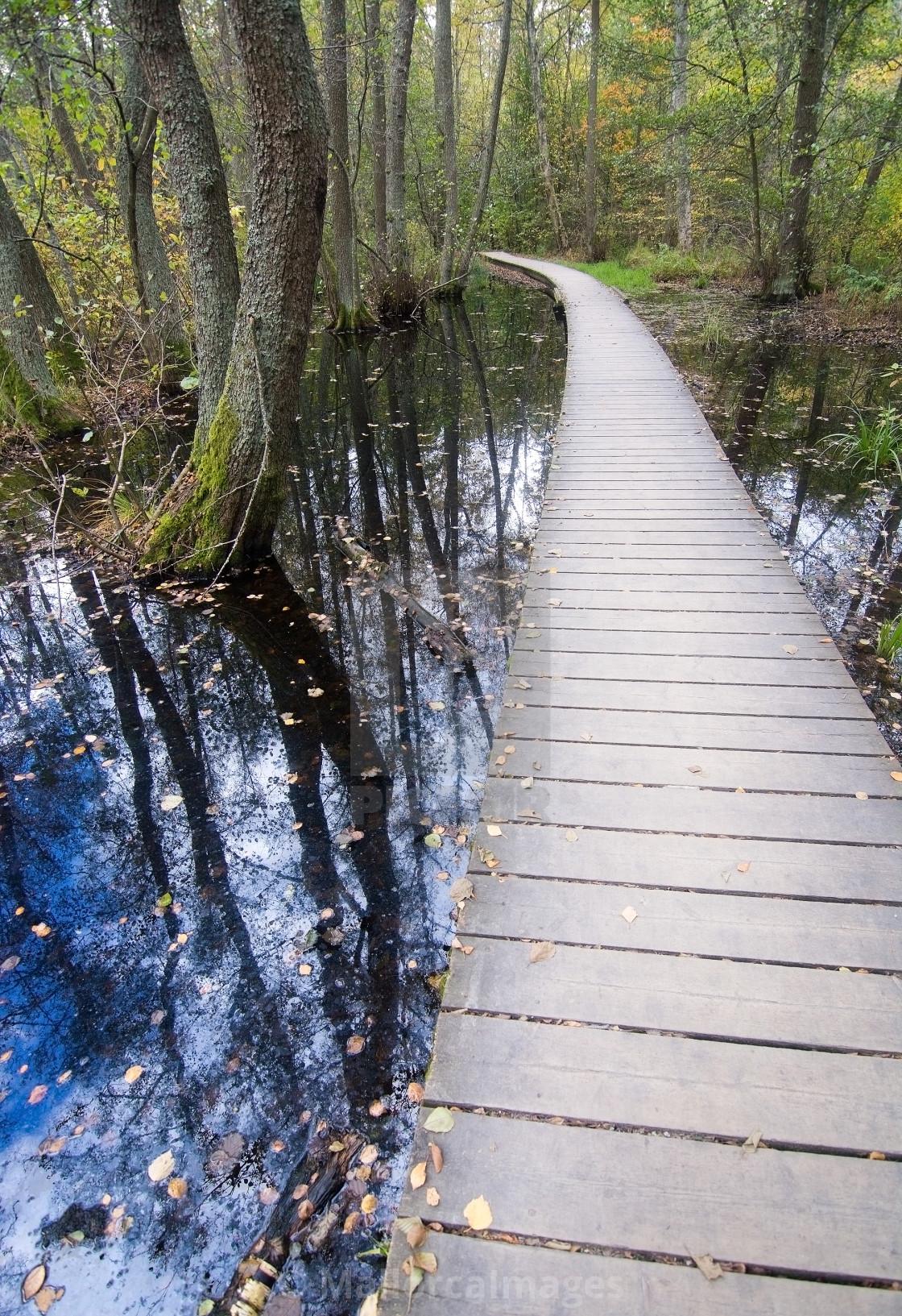 """Boardwalk through forest landscape"" stock image"