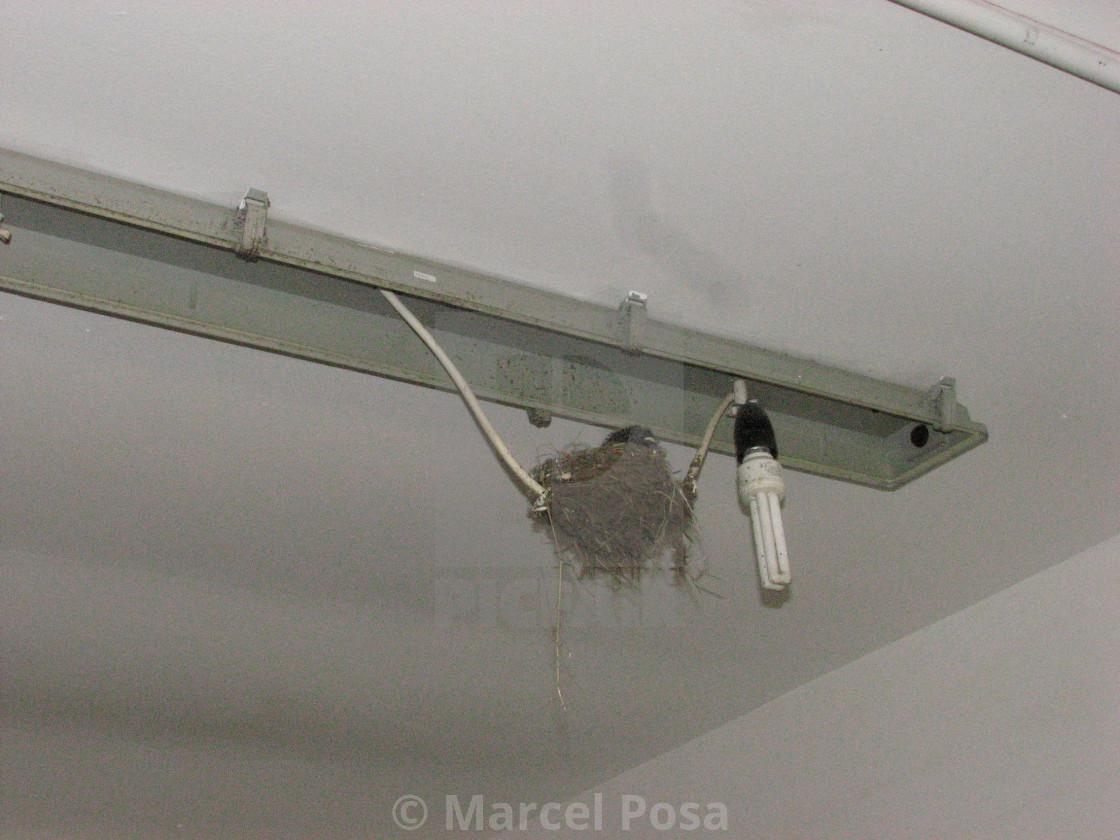 """The strangest swallow's nest"" stock image"