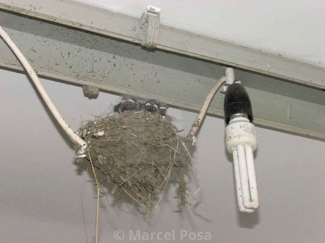 """The strangest swallow's nest 1"" stock image"