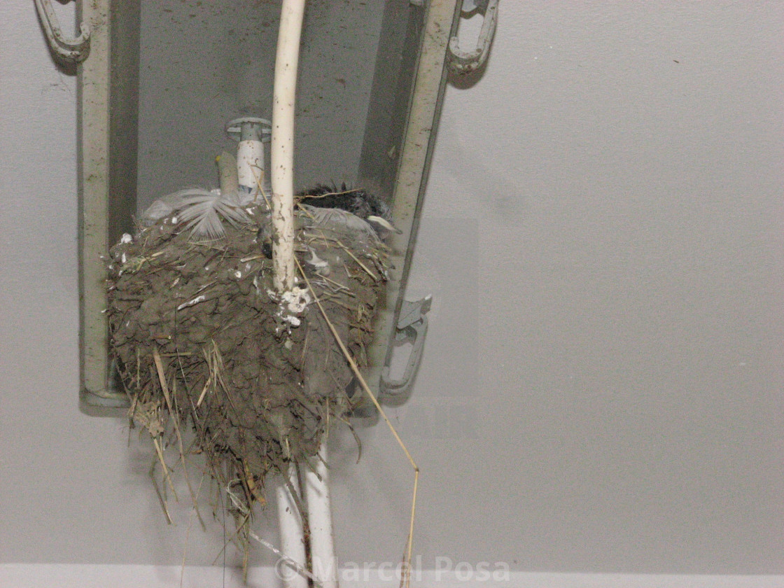 """""""The strangest swallow's nest (underneath view)"""" stock image"""