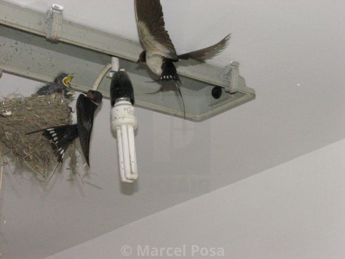 """The strangest swallow's nest 5"" stock image"