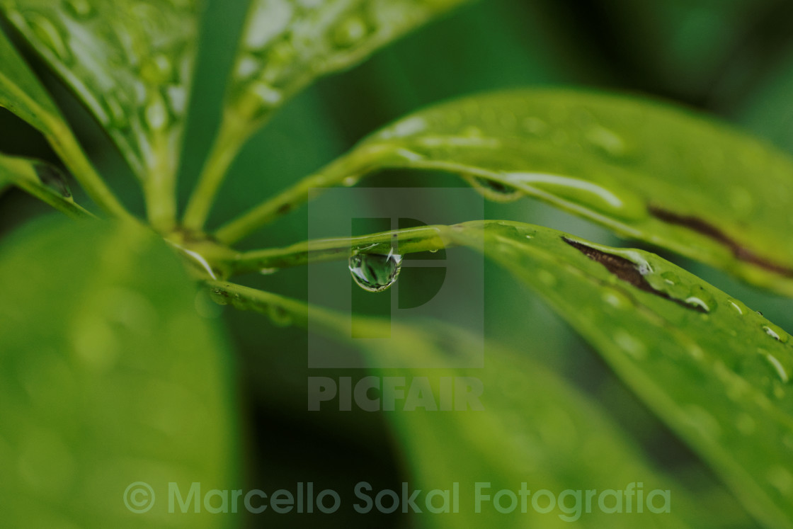 """Green leafs and raindrop"" stock image"