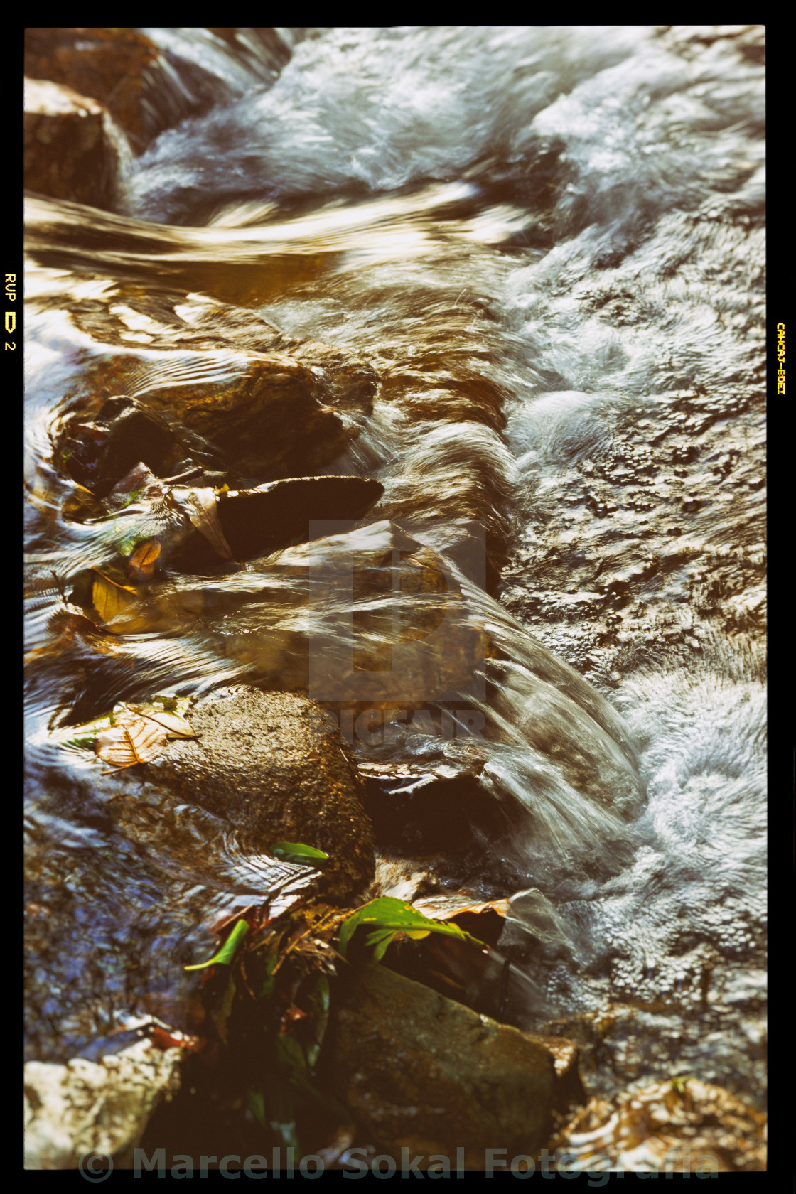 """""""In the river..."""" stock image"""