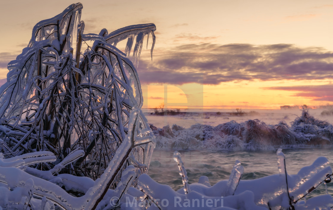 """Icy Tree Sunrise"" stock image"