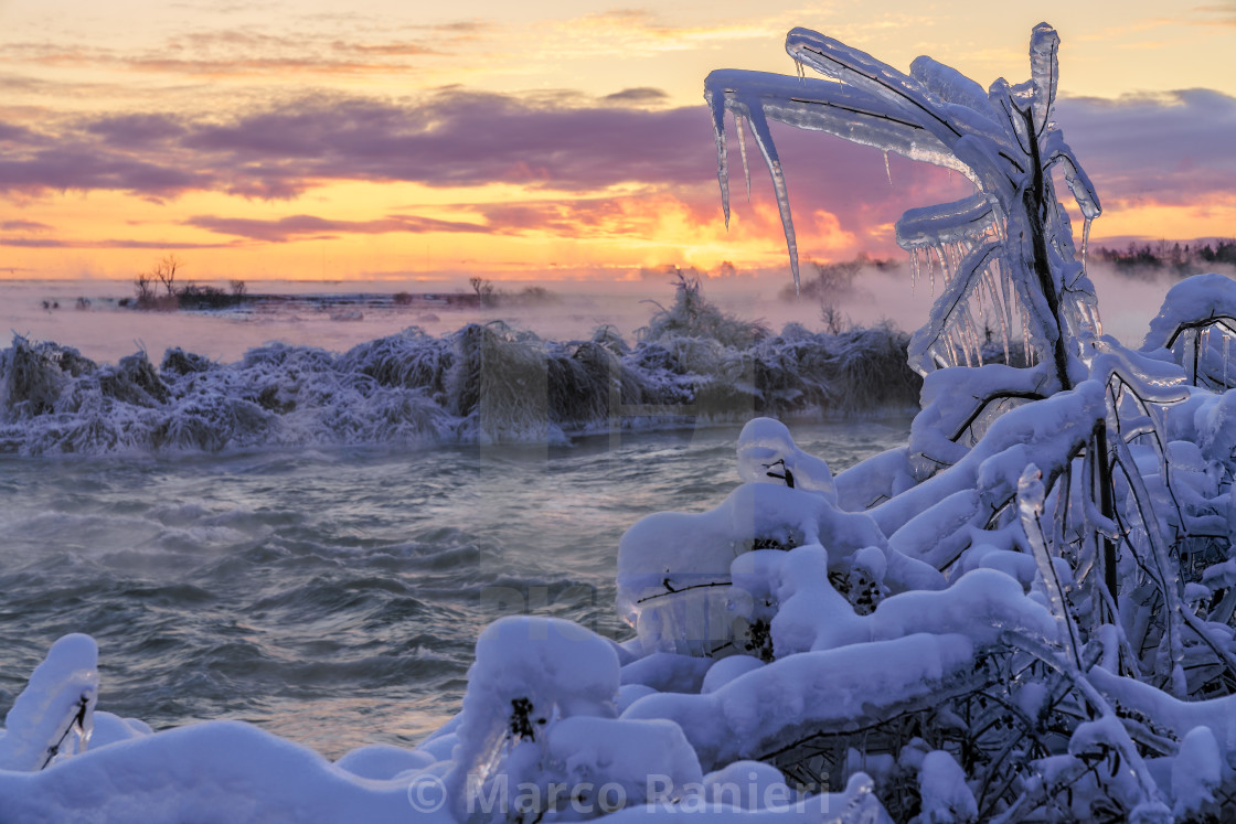 """Icy Tree Sunrise 2"" stock image"