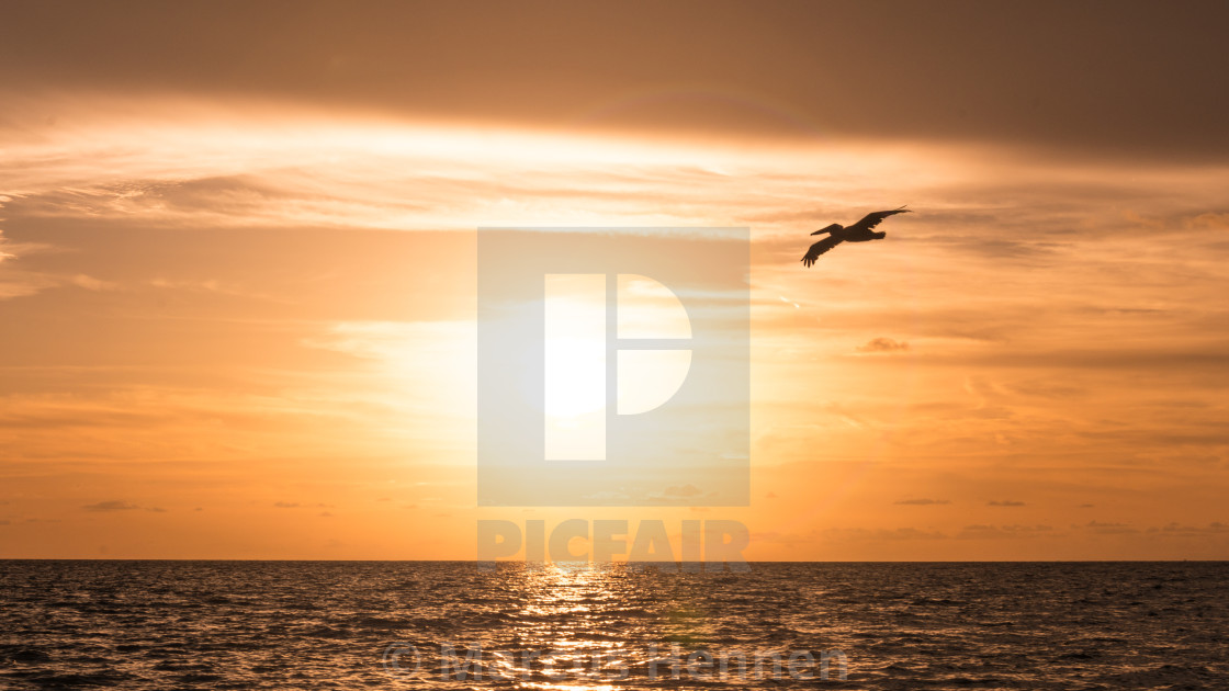 """Sunset and pelican"" stock image"